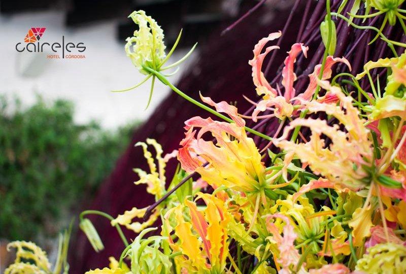 flora-festival-hotel-caireles-cordoba-compressor