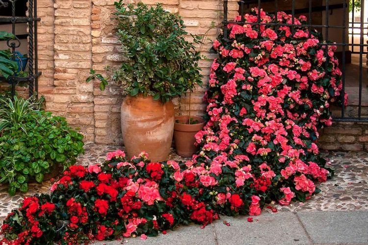 FLORA-Festival-Internacional-de-las-Flores-Córdoba-Hotel-Caireles 8